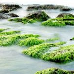 Surprising Spirulina Benefits that You Should Take Advantage of