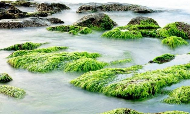 Surprising Spirulina Benefits that You Should Take Advantage of